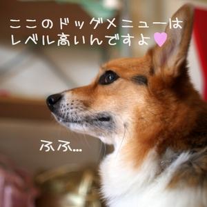Ssengokubara_055