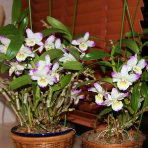 Flower_029s