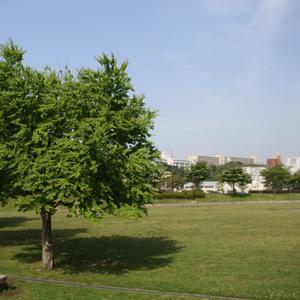 Asura_karura_059
