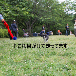 Flyball_0819