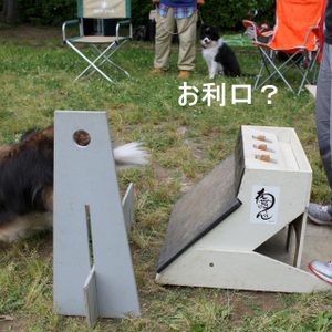 Flyball_0929