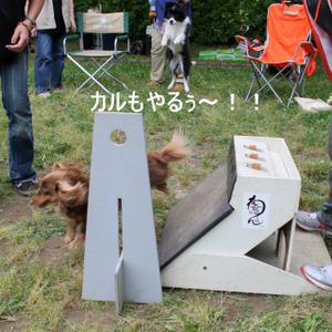 Flyball_0934