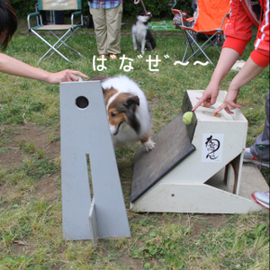 Flyball_1085