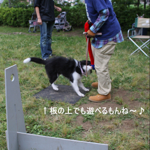 Flyball_1350