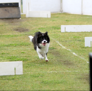 Flyball_1637_2