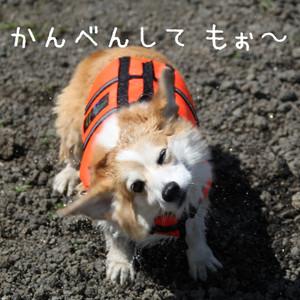 Mmotosu_0075