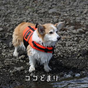 Mmotosu_0223