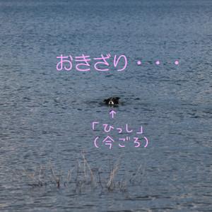 Mmotosu_1055