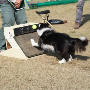 Flyball_1899