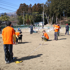 Mms_flyball_0531