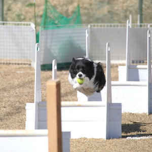 Ms_flyball_0484