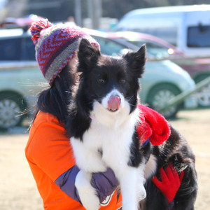 Ms_flyball_0526