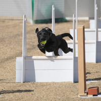 Ms_flyball_0556