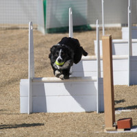 Ms_flyball_0580