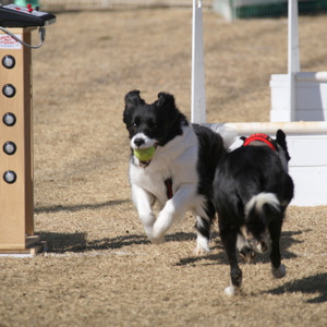Ms_flyball_0616