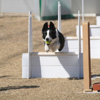 Ms_flyball_0640_2