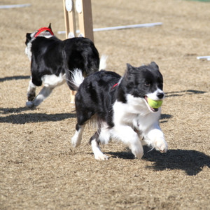 Ms_flyball_2297
