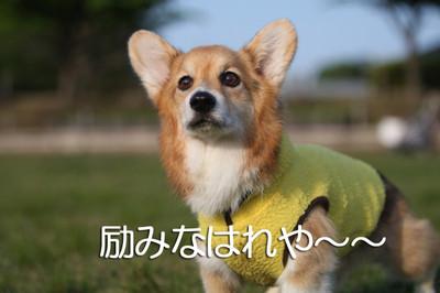 Hino_118m