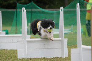 Ms_flyball_0253