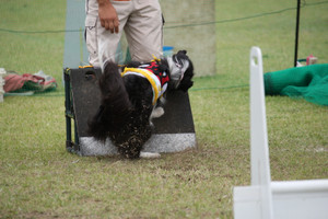 Ms_flyball_0555