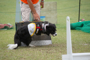 Ms_flyball_0557