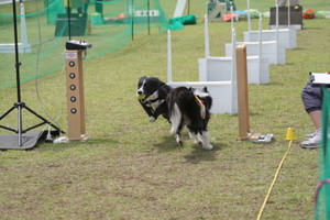 Ms_flyball_1352