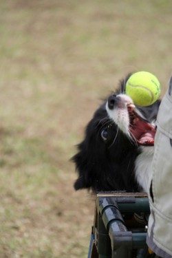 Ms_flyball_1554