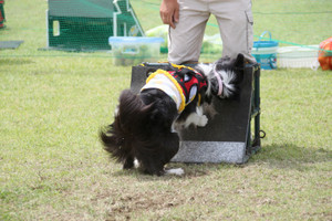 Ms_flyball_1690