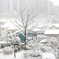 Snow_0056