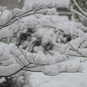 Snow_0081