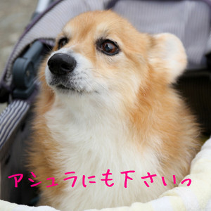 Mnakatsu_0114