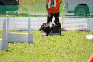 Flyball_0835