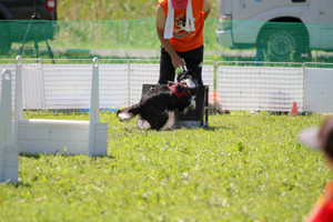 Flyball_0836