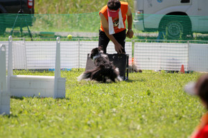 Flyball_0838