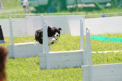 Flyball_1381