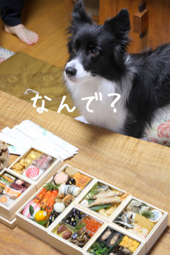 Kyusyu_0096_e