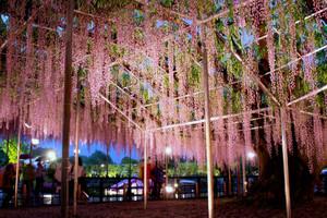 Ashikaga_0021
