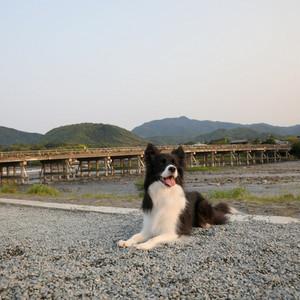 Arashiyama_0016