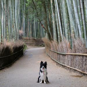 Arashiyama_0103