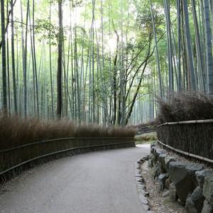 Arashiyama_0115