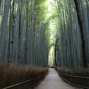 Arashiyama_0143