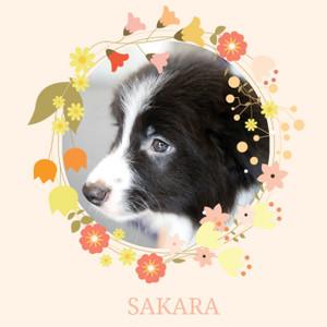 Welcomesakara_002